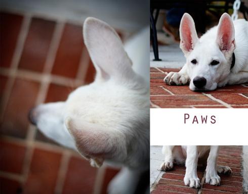 Paws2_2